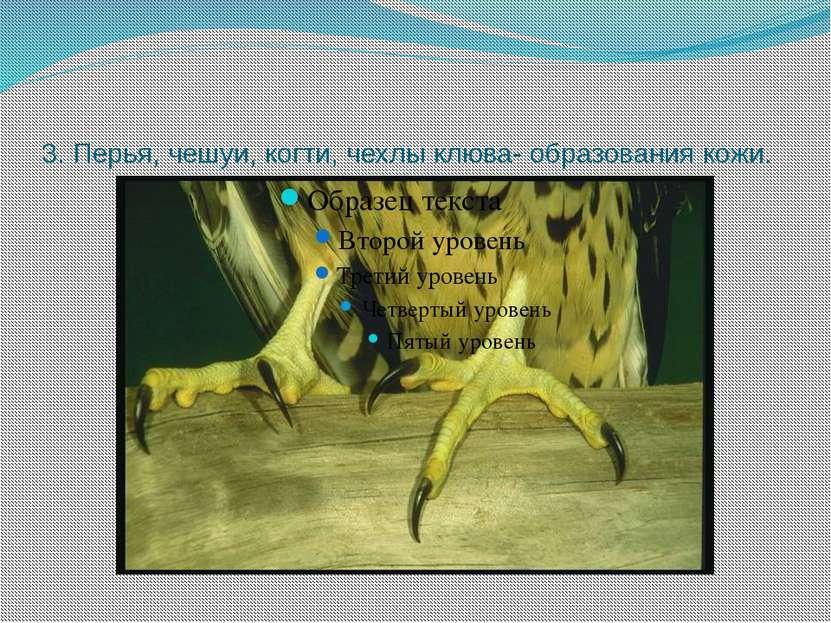 3. Перья, чешуи, когти, чехлы клюва- образования кожи.