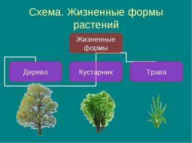 Схема. Жизненные формы растений