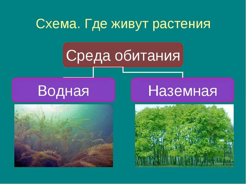Схема. Где живут растения