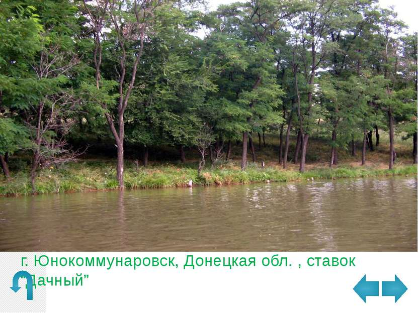р-н Святогорья , Украина