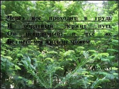 Через нос проходит в грудь И обратный держит путь Он невидимый: и всё же Без ...