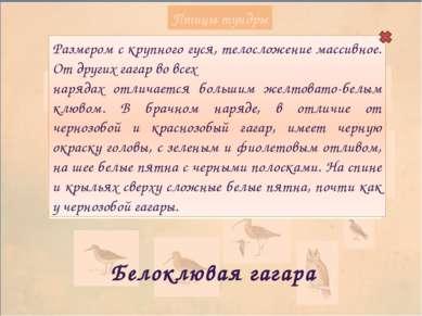 Птицы тундры Беркут Крупный орел, вес самцов 2,8–4,6, самок – 3,8–6,7 кг, раз...