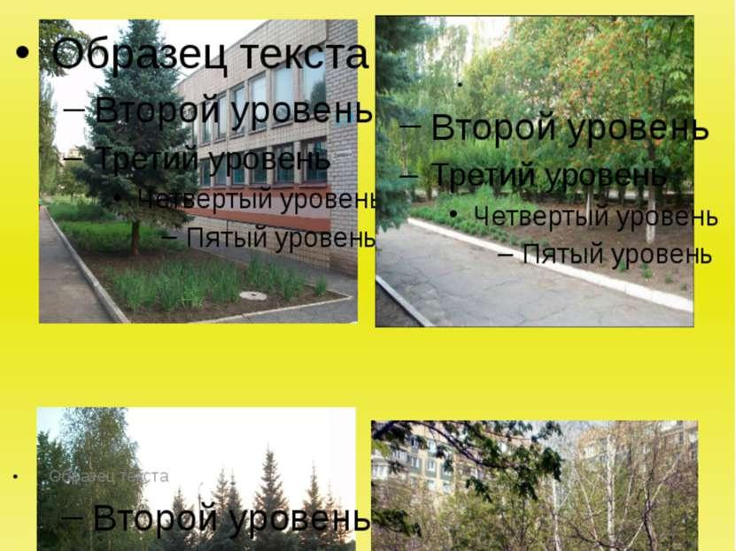 Площа озеленення КЗШ №119 складає 2,5 га та має захисні земельні смуги по пер...