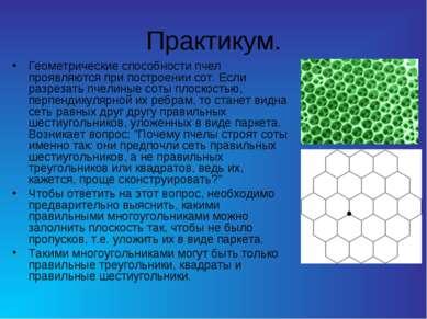 Практикум. Геометрические способности пчел проявляются при построении сот. Ес...