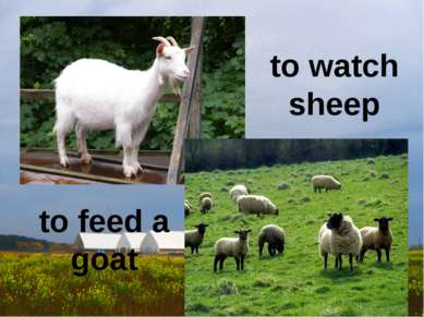 to watch sheep to feed a goat