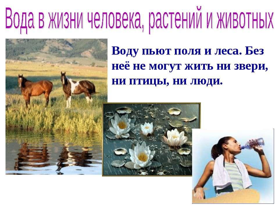 Воду пьют поля и леса. Без неё не могут жить ни звери, ни птицы, ни люди.