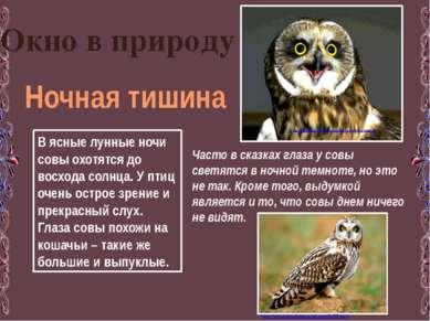 Окно в природу Ночная тишина В ясные лунные ночи совы охотятся до восхода сол...