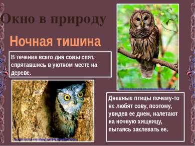 Окно в природу Ночная тишина В течение всего дня совы спят, спрятавшись в уют...