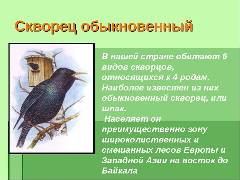Скворец обыкновенный В нашей стране обитают 6 видов скворцов, относящихся к 4...