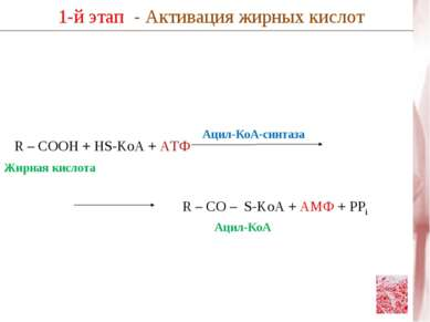R – COOH + HS-KoA + АТФ 1-й этап - Активация жирных кислот R – CO – S-KoA + А...