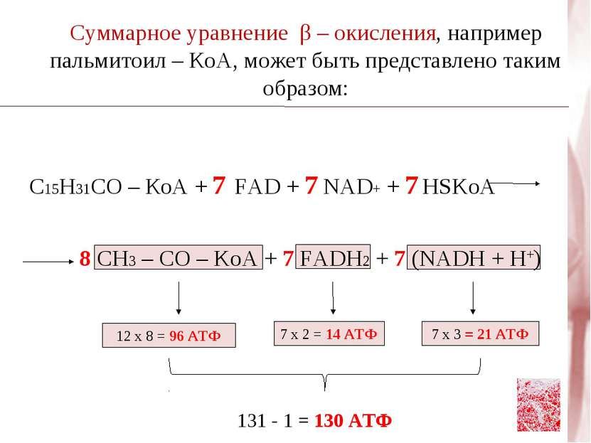 Суммарное уравнение β – окисления, например пальмитоил – КоА, может быть пред...