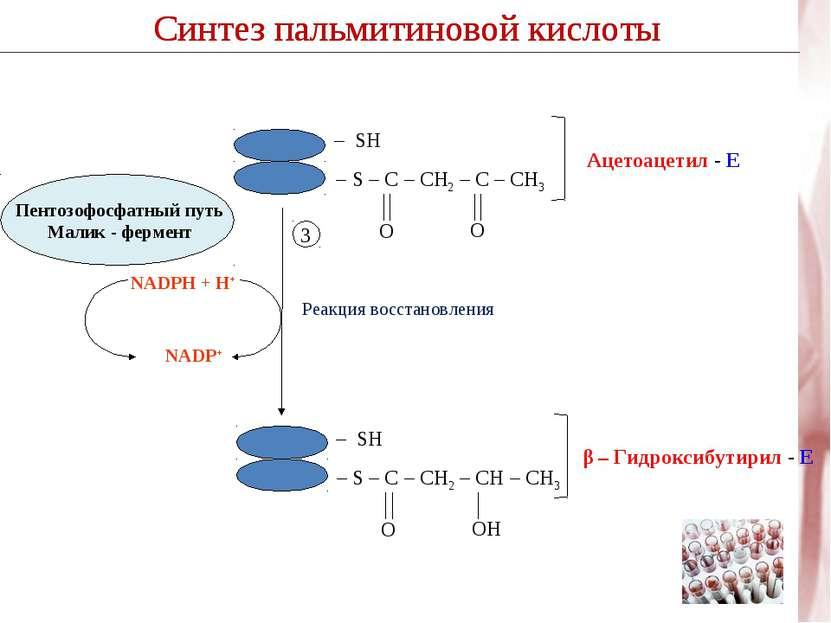 Синтез пальмитиновой кислоты Реакция восстановления NADPH + H+ NADP+ 3 Синтез...