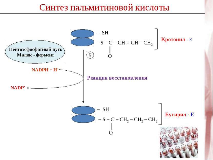 Синтез пальмитиновой кислоты Реакция восстановления 5 NADP+ NADPH + H+