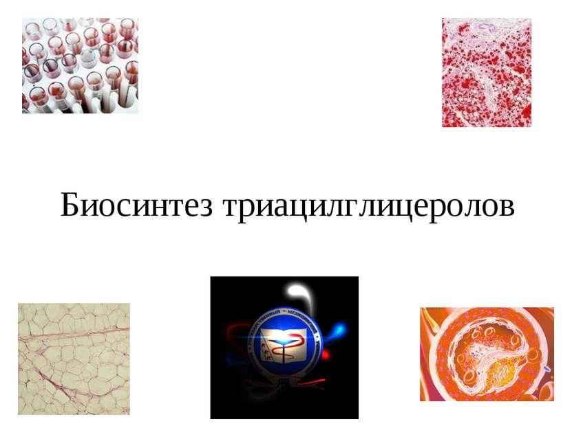 Биосинтез триацилглицеролов