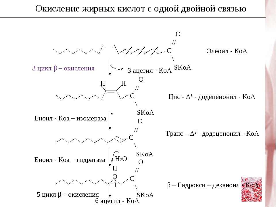 Окисление жирных кислот с одной двойной связью Н2О 3 цикл β – окисления 3 аце...