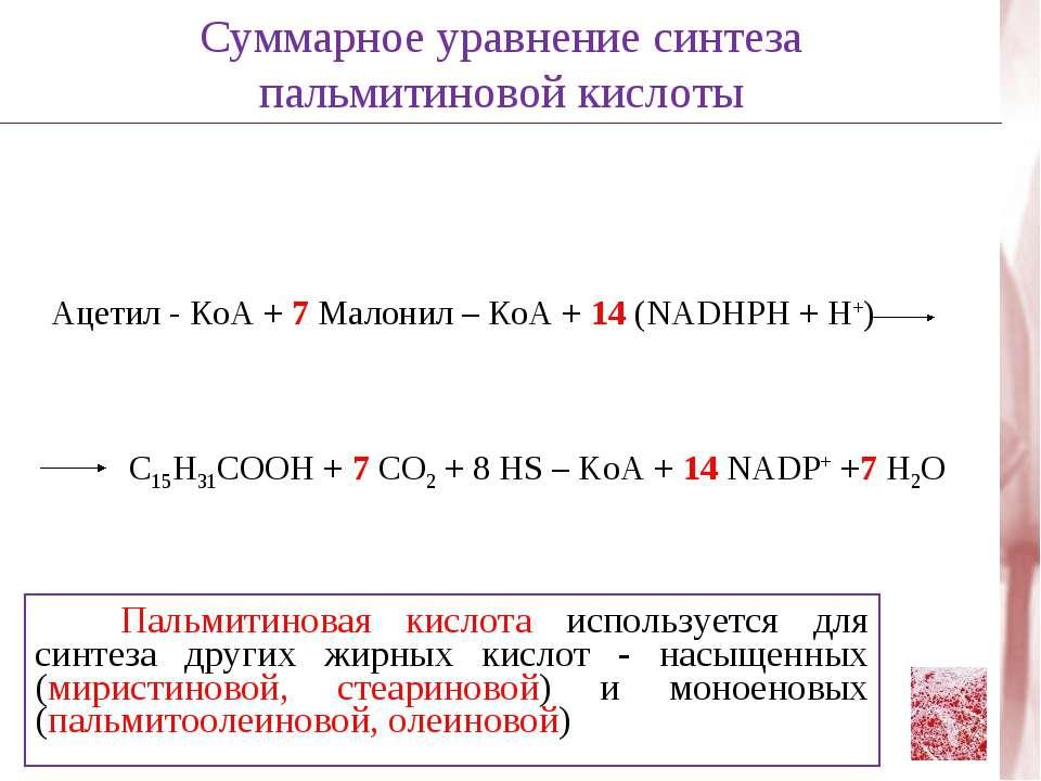 Ацетил - КоА + 7 Малонил – КоА + 14 (NADHPH + H+) C15H31COOH + 7 CO2 + 8 HS –...