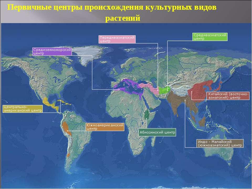 Первичные центры происхождения культурных видов растений