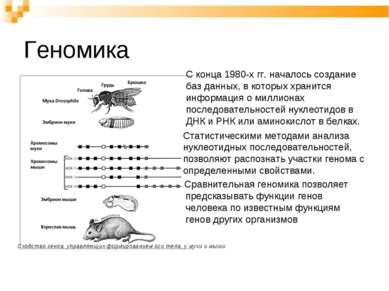 Геномика С конца 1980-х гг. началось создание баз данных, в которых хранится ...