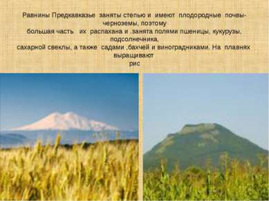 Равнины Предкавказье заняты степью и имеют плодородные почвы- черноземы, поэт...