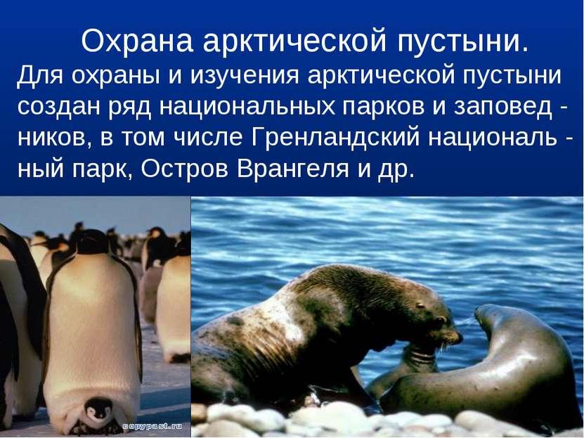 Охрана арктической пустыни. Для охраны и изучения арктической пустыни создан ...