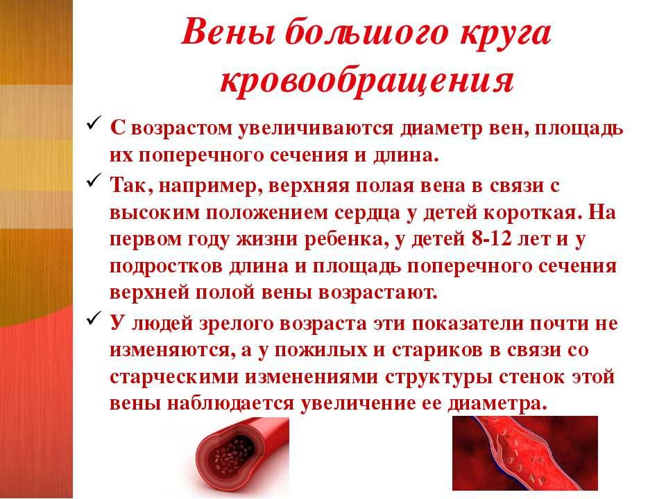Вены большого круга кровообращения С возрастом увеличиваются диаметр вен, пло...
