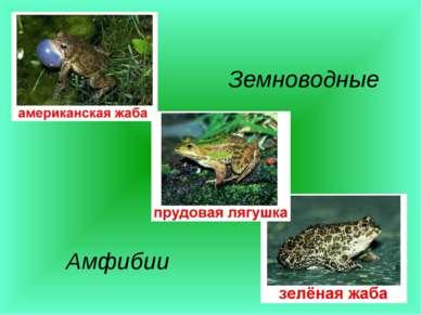 Земноводные Амфибии
