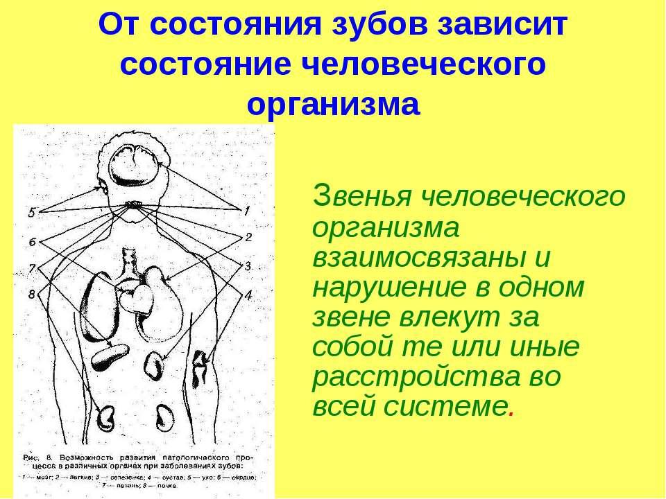 От состояния зубов зависит состояние человеческого организма Звенья человечес...