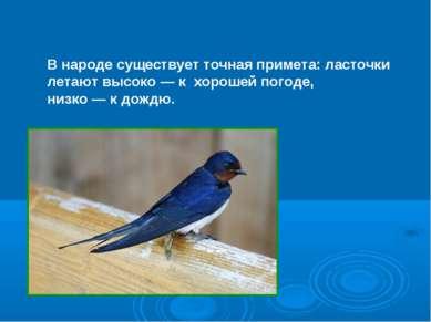 В народе существует точная примета: ласточки летают высоко — к хорошей погоде...