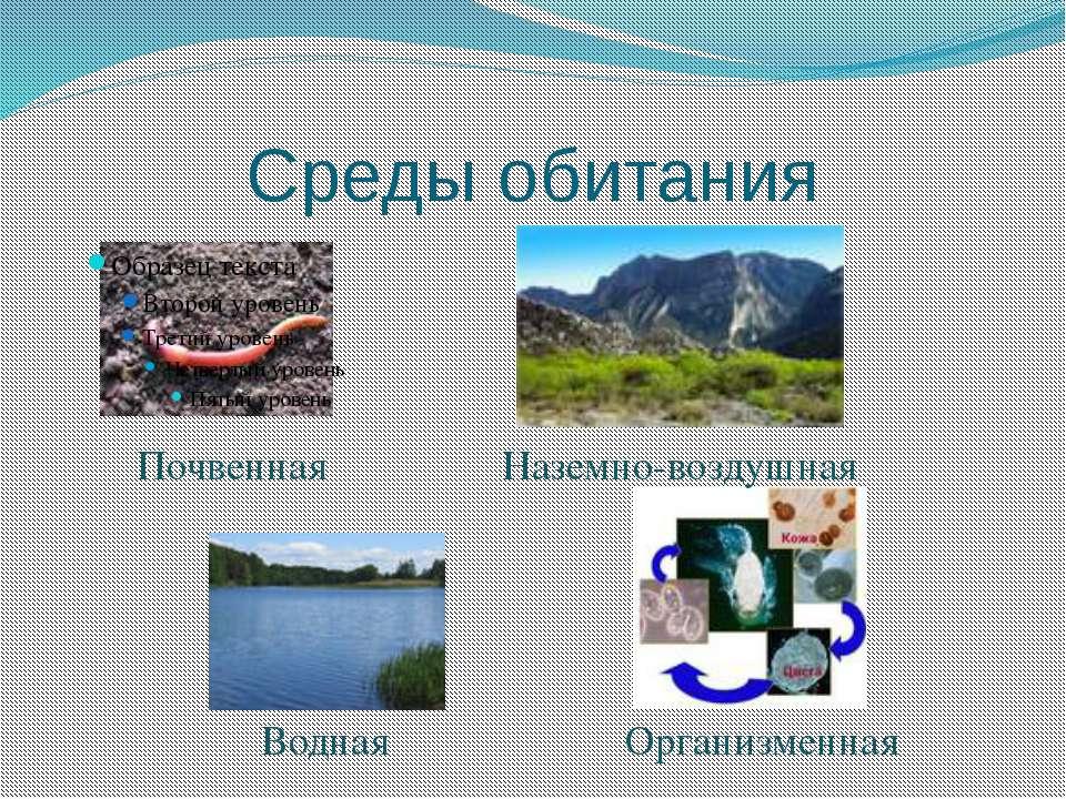 Среды обитания Почвенная Наземно-воздушная Водная Организменная