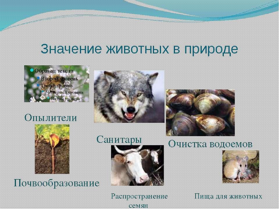 Значение животных в природе Опылители Санитары Очистка водоемов Почвообразова...