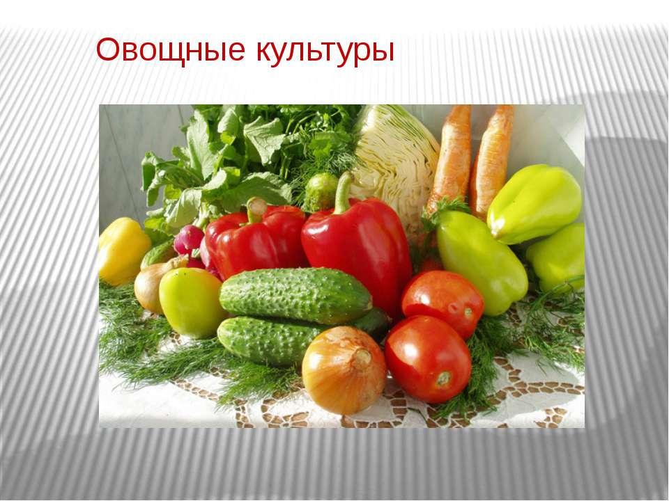 Овощные культуры