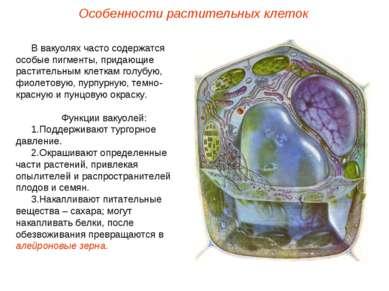 В вакуолях часто содержатся особые пигменты, придающие растительным клеткам г...