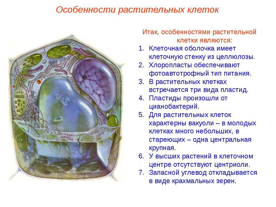 Итак, особенностями растительной клетки являются: Клеточная оболочка имеет кл...