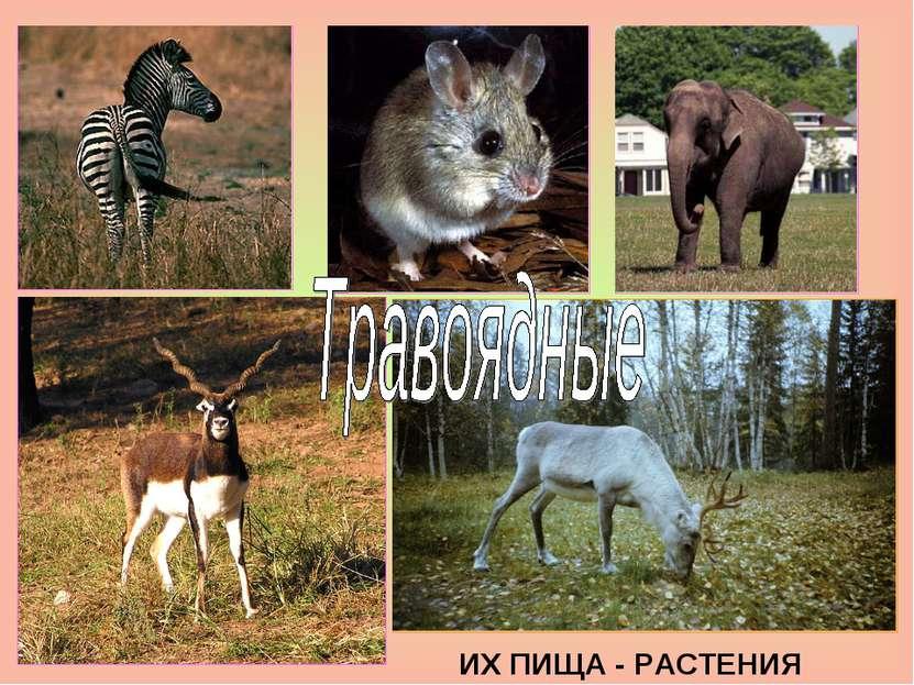 ИХ ПИЩА - РАСТЕНИЯ