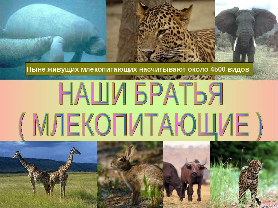 Ныне живущих млекопитающих насчитывают около 4500 видов