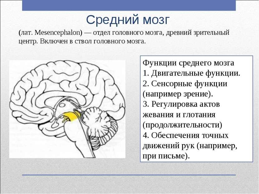 Средний мозг Функции среднего мозга 1. Двигательные функции. 2. Сенсорные фун...