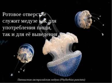 Ротовое отверстие служит медузе как для употребления пищи, так и для её вывед...