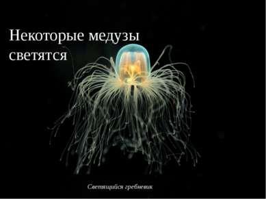 Светящийся гребневик Некоторые медузы светятся