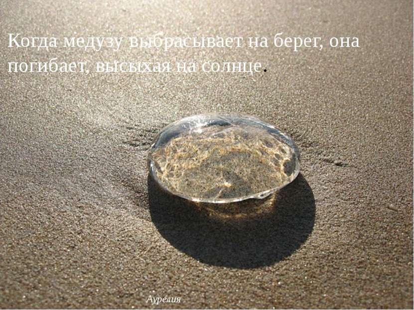 Когда медузу выбрасывает на берег, она погибает, высыхая на солнце. Аурелия