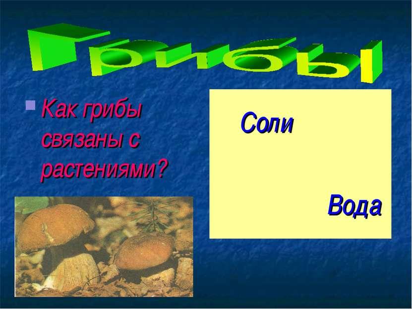 Как грибы связаны с растениями?