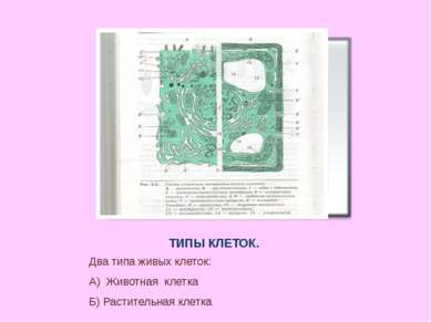 ТИПЫ КЛЕТОК. Два типа живых клеток: А) Животная клетка Б) Растительная клетка