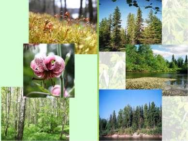 Типичные растения тайги это багульник, валериана, горец, крапива, кубышка, ол...
