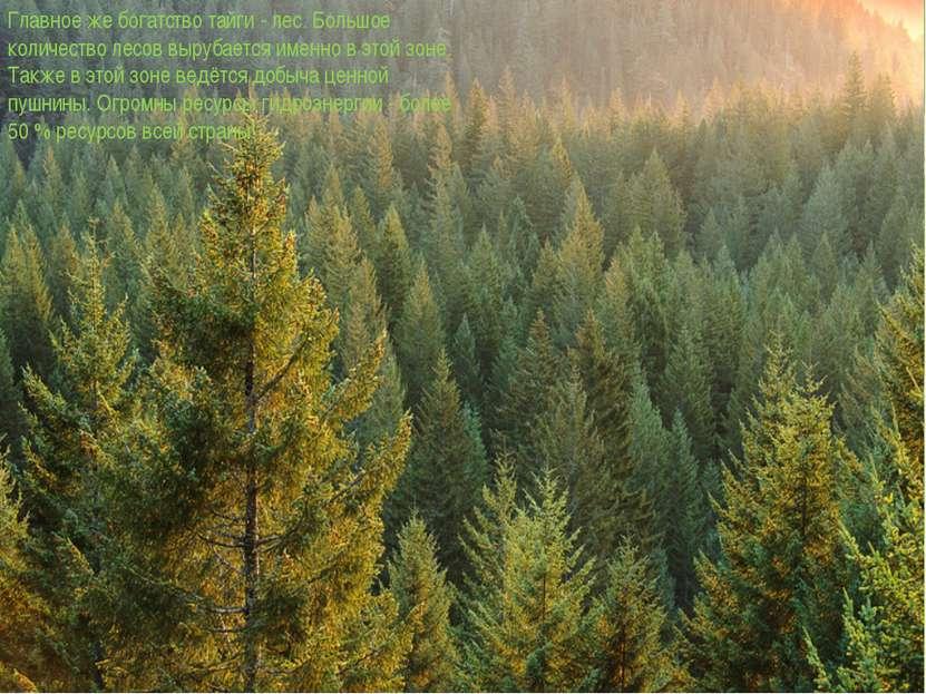 Главное же богатство тайги - лес. Большое количество лесов вырубается именно ...