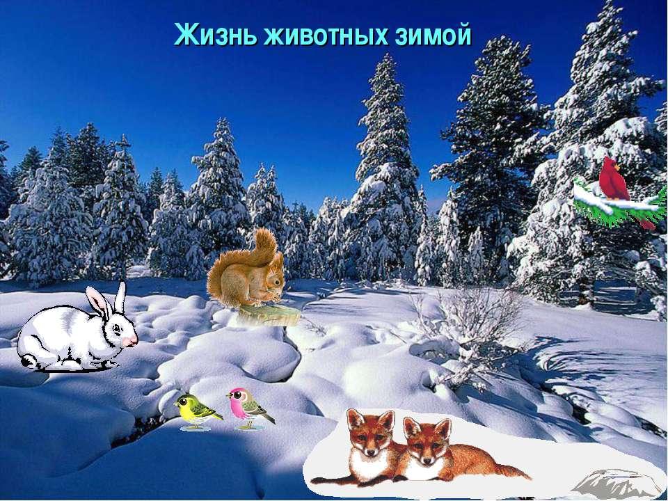 Жизнь животных зимой