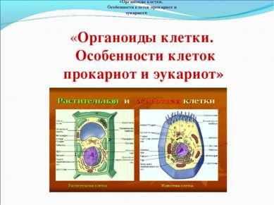 «Органоиды клетки. Особенности клеток прокариот и эукариот» «Органоиды клетки...