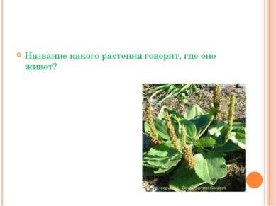 Название какого растения говорит, где оно живет?