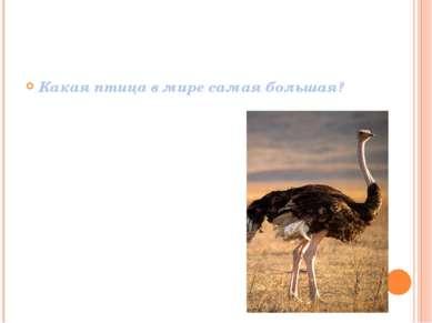 Какая птица в мире самая большая?