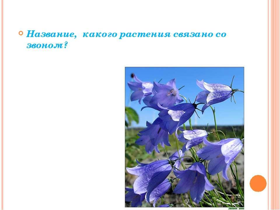 Название, какого растения связано со звоном?
