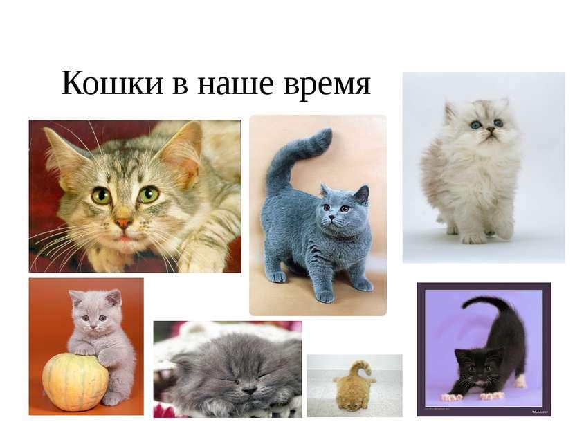 Кошки в наше время