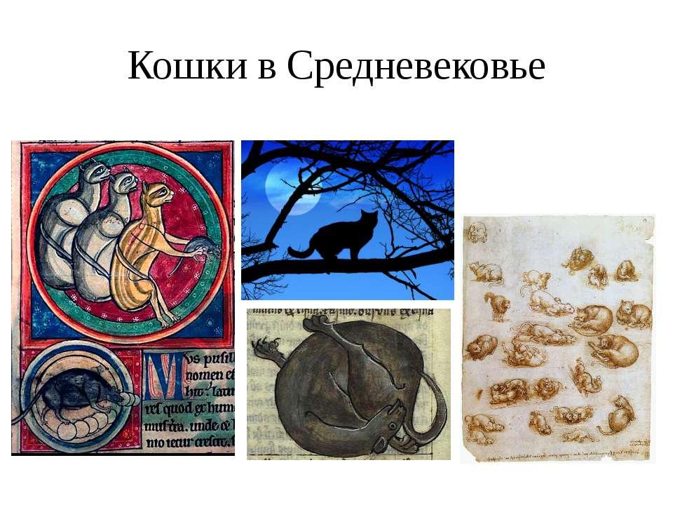 Кошки в Средневековье